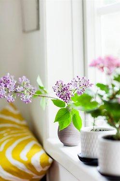 Foto. Blommor på en fönsterbräda, rosa pelargon och lila syrén.