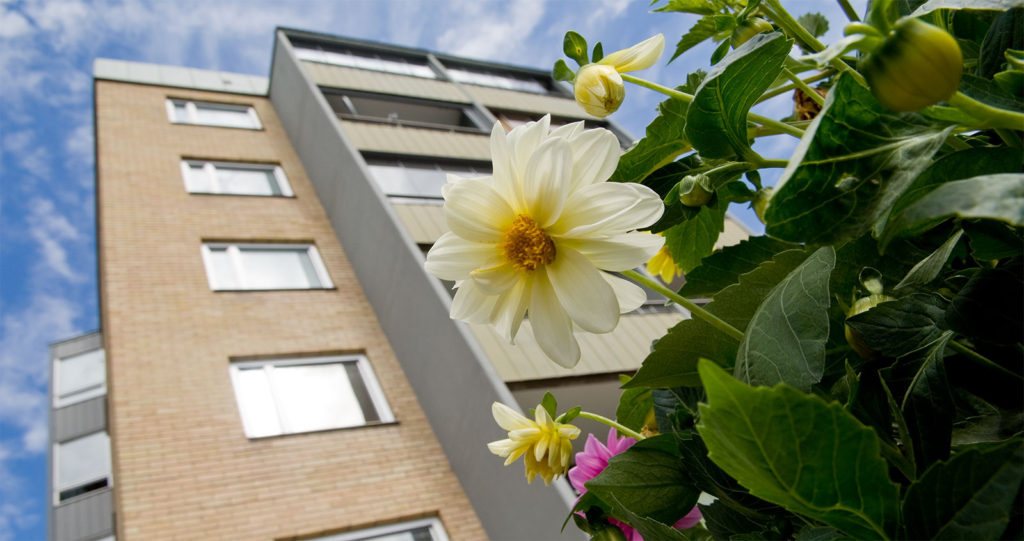 Foto. Bild tagen underifrån med en vit blomma i fokus. I bakgrunden syns ett höghus i gult tegel med balkonger.